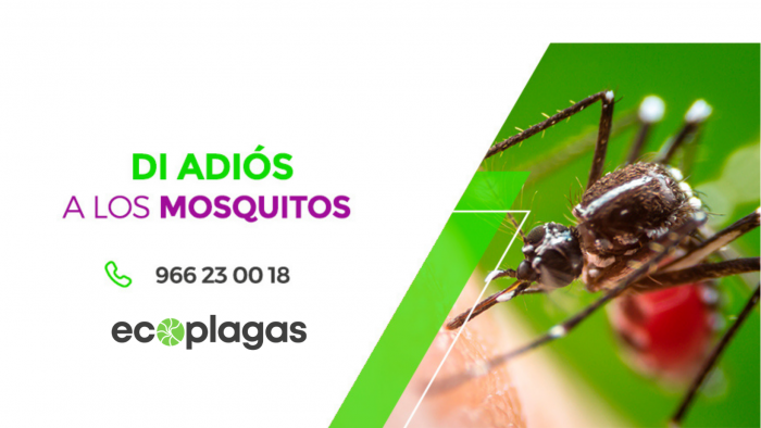 Servicio control antimosquitos